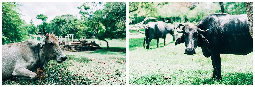 Urlaub Srilanka_0040.jpg
