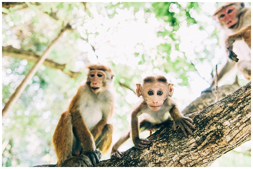 Urlaub Srilanka_0077.jpg