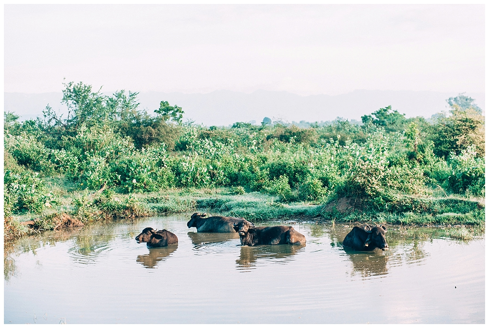 Urlaub Srilanka_0088.jpg