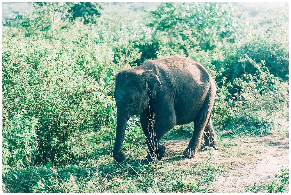 Urlaub Srilanka_0089.jpg