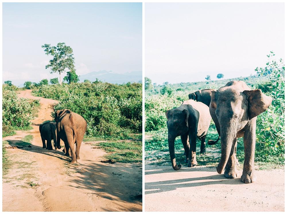 Urlaub Srilanka_0091.jpg